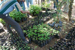 Nyumbani - Planes de Reforestación en el Sur