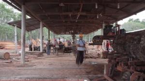 Nuevos proyectos de cooperación al desarrollo en el ámbito forestal y del Comercio Justo en Guatemala