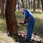 Productor forestal
