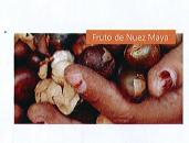 Nuez maya